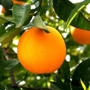 Naranjas mesa 10Kg (variedad …)