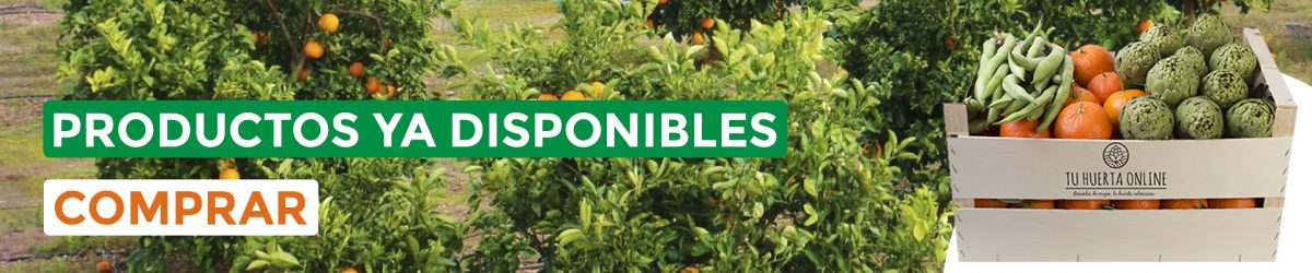 verdura ecologica Valencia